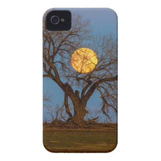 November Supermoon Tree iPhone 4 Case-Mate Case