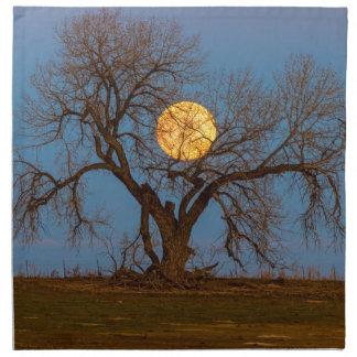 November Supermoon Tree Napkin