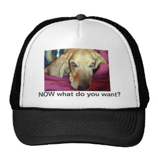 NOW what do you want? Basset Hat