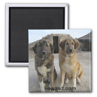 Nowzad Dogs Magnet