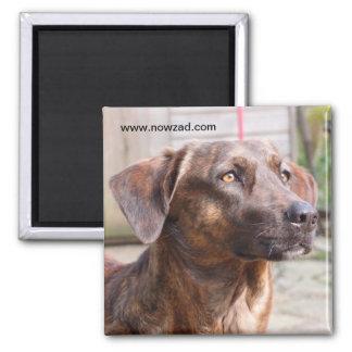 Nowzad Rescue Dog Brin Magnet