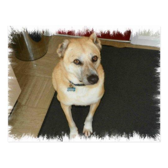 Nowzad Rescue Dog Postcard