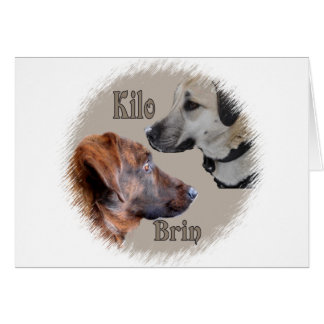 Nowzad Rescue Dogs Brin & Kilo Notecard