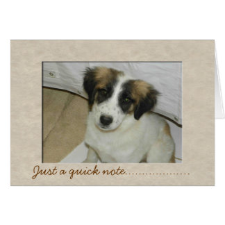 Nowzad Rescue Spike Notecard
