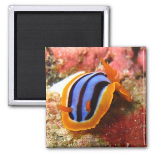 nudibranch magnet - 2