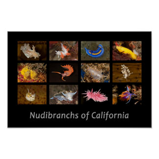 Nudibranchs of California Poster