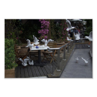 Number Of Pigeons On The Table For Food Posters