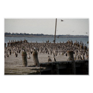 Number Of Sea Gulls On Wharf Poster