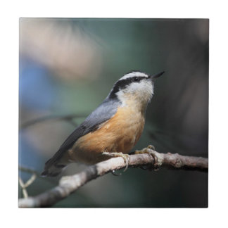 Nuthatch Small Square Tile