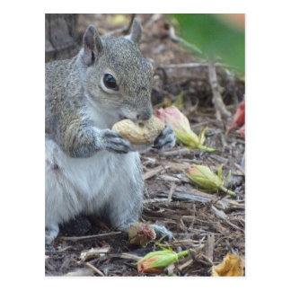 Nutty Lunch Postcard