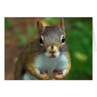 Nutty Red Squirrel Greeting Card