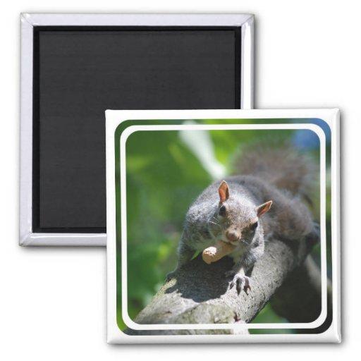 Nutty Squirrel Magnet Refrigerator Magnets