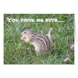 Nutty Squirrel Note Card