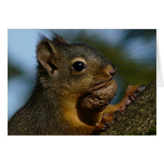 Nutty Squirrel Photo Note Card