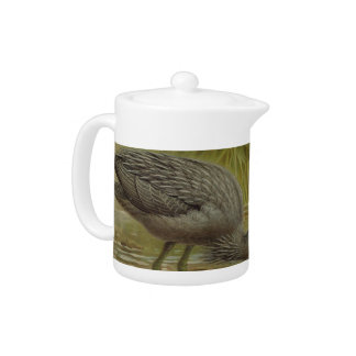 NZ Herons Semi-Abstract Teapot