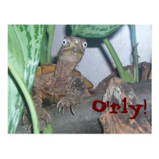o'rly, O'rly! Postcard