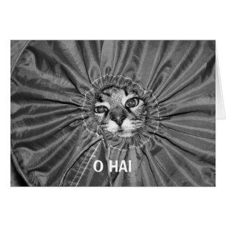 O Hai LOLcat Card