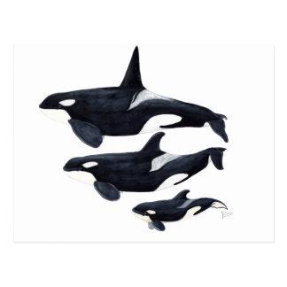O.orca-fond transparent postcard