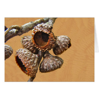 Oak Acorn Caps Card