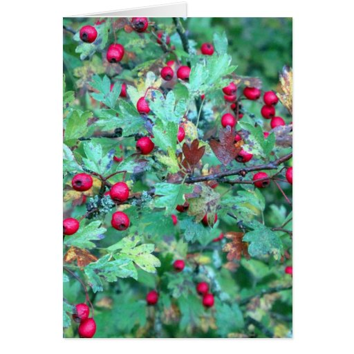 Oak and berries greeting card