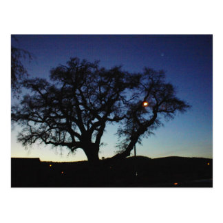 Oak at Dusk in Paso Robles Postcard