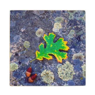 Oak Leaf and Acorns on a Lichen covered rock Wood Coaster