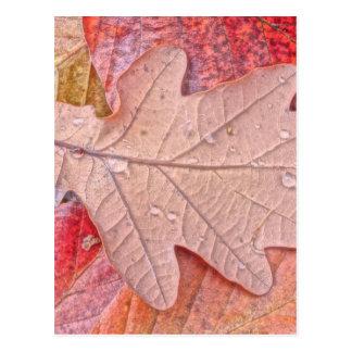 oak leaf in autumn postcard