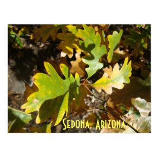 oak leaf, Sedona, Arizona Postcard