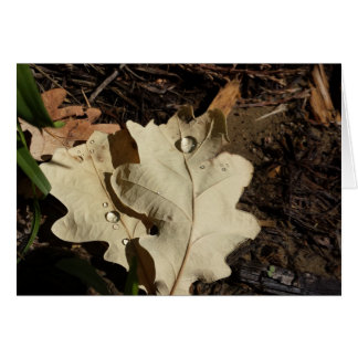 Oak Leaf with Water Droplet Greeting Card