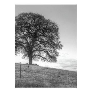 Oak Tree On A Hill Invitations