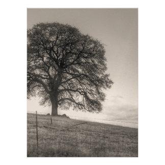 Oak Tree On A Hill Custom Invites