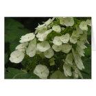 Oakleaf hydrangea (Hydrangea quercifolia) card