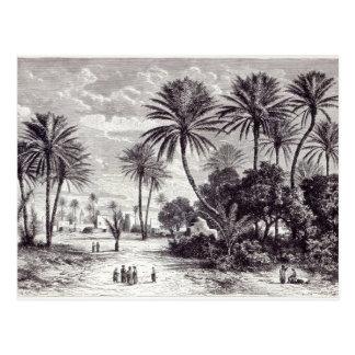 Oasis of Gafsa: Tunis Postcard