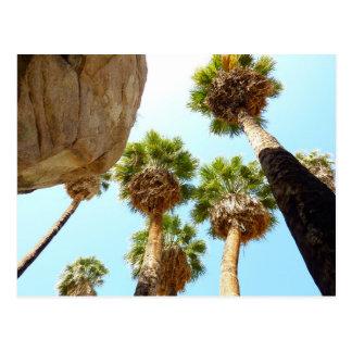 Oasis Palms at Joshua Tree National Park Postcard