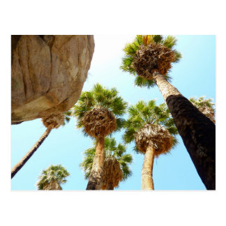 Oasis Palms in Joshua Tree National Park Postcard