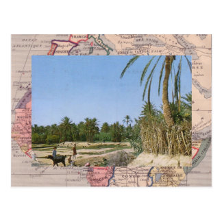 Oasis, southern Morocco Postcard