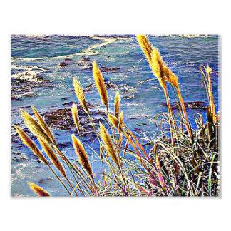 Oat Grass & Waves Art Photo