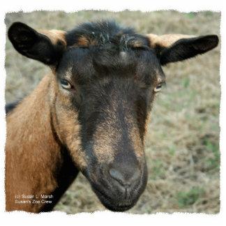 Oberhassli Goat Keychain Sculpture Standing Photo Sculpture