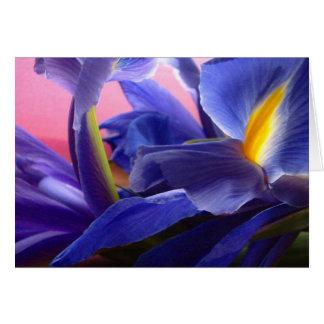 oboi-iris greeting card
