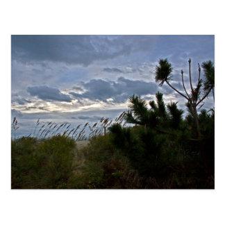 OBX Pine Postcard