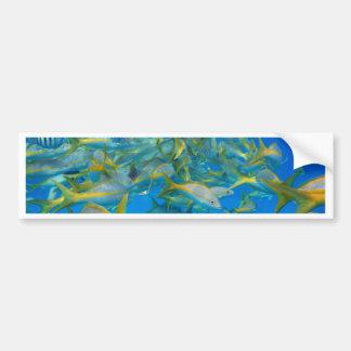 Ocean Fish Bumper Sticker