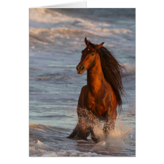 Ocean Horse at Sunset Horse Greeting Card