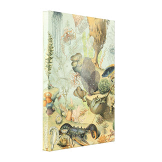 Ocean Life Illustrations by Adolphe Millot Canvas Canvas Print