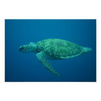 Ocean Photography Sea Turtle Poster