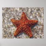 Ocean Starfish Posters