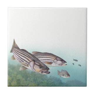 Ocean Striped Bass Fish Sea Fishing Tile