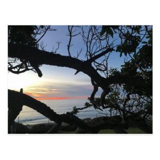 Ocean & Trees Postcard
