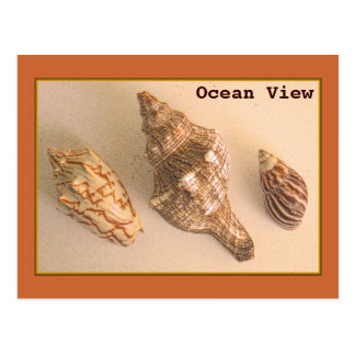 Ocean View Shells Postcard