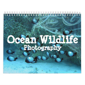 Ocean Wildlife Photography Calendar