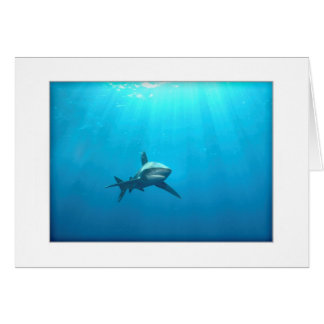 Oceanic Whitetip Shark Greeting Card